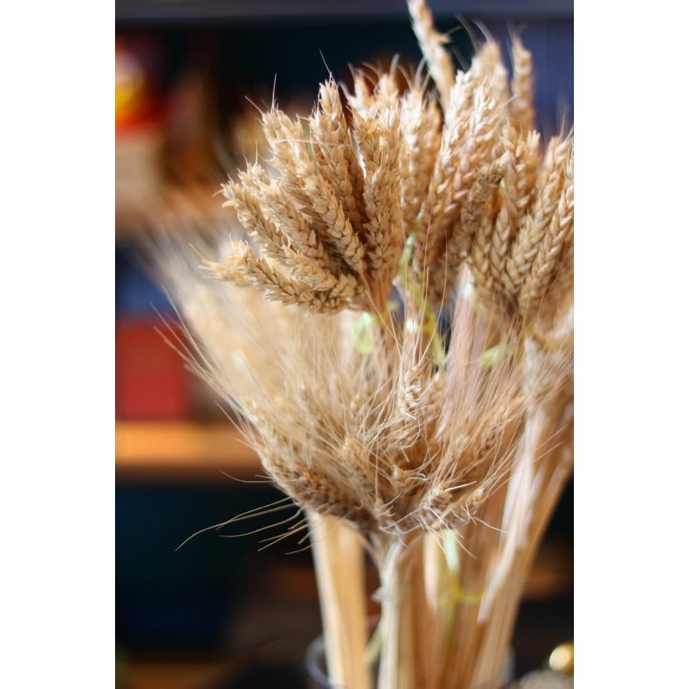 Пшеничный колос — символ жизни и процветания, достатка и зажиточности,  поможет сохранить нажитое  и устранить денежные проблемы в доме
