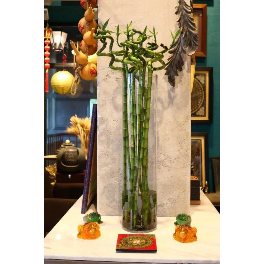 Бамбук это средство для долголетия, но также помогает от краж и грабежей...