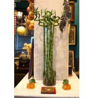 Бамбук по фен-шуй - символ удачи